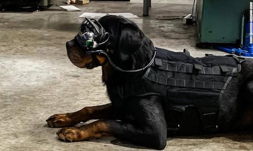 A dog wearing Army-issued goggles.